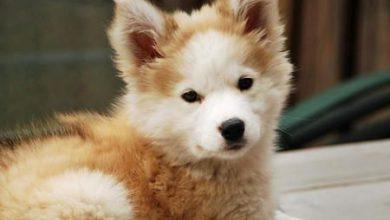 Lustige Hunde Bilder Mit Sprüchen Kostenlos Für Facebook 390x220 - Lustige Hunde Bilder Mit Sprüchen Kostenlos Für Facebook