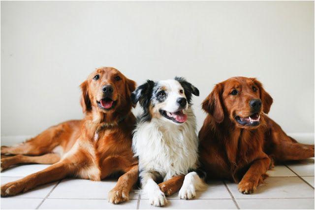 Lustige Hunde Bilder Mit Sprüchen Kostenlos Für Whatsapp