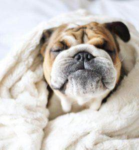 Lustige Hunde Bilder Mit Sprüchen Kostenlos Herunterladen 278x300 - Lustige Hunde Bilder Mit Sprüchen Kostenlos Herunterladen