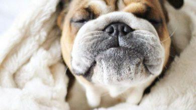 Lustige Hunde Bilder Mit Sprüchen Kostenlos Herunterladen 390x220 - Lustige Hunde Bilder Mit Sprüchen Kostenlos Herunterladen