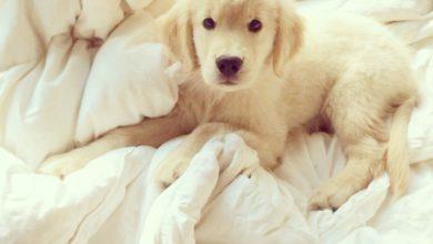 Lustige Hunde Bilder Mit Sprüchen Kostenlos Kostenlos 390x220 - Lustige Hunde Bilder Mit Sprüchen Kostenlos Kostenlos