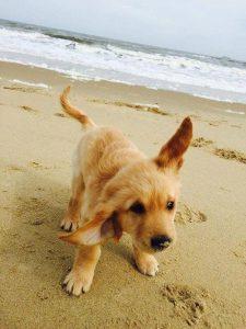 Lustige Hunde Bilder Mit Sprüchen Kostenlos Kostenlos Herunterladen 225x300 - Lustige Hunde Bilder Mit Sprüchen Kostenlos Kostenlos Herunterladen