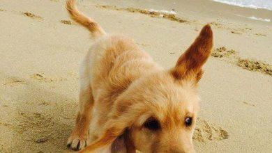Lustige Hunde Bilder Mit Sprüchen Kostenlos Kostenlos Herunterladen 390x220 - Lustige Hunde Bilder Mit Sprüchen Kostenlos Kostenlos Herunterladen