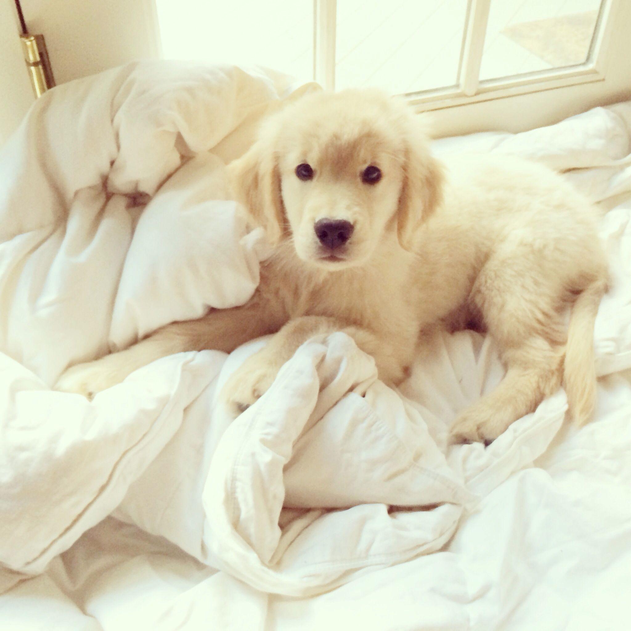 Lustige Hunde Bilder Mit Sprüchen Kostenlos Kostenlos - Lustige Hunde Bilder Mit Sprüchen Kostenlos Kostenlos