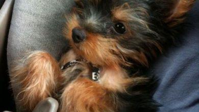 Lustige Hunde Bilder Mit Text 390x220 - Lustige Hunde Bilder Mit Text