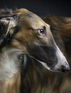 Lustige Hunde Bilder Mit Text Für Facebook 230x300 - Lustige Hunde Bilder Mit Text Für Facebook