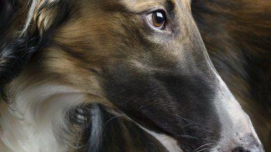Lustige Hunde Bilder Mit Text Für Facebook 390x220 - Lustige Hunde Bilder Mit Text Für Facebook
