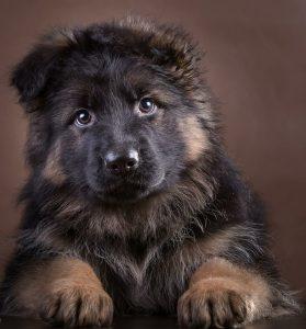 Lustige Hunde Bilder Mit Text Für Whatsapp 279x300 - Lustige Hunde Bilder Mit Text Für Whatsapp