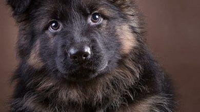 Lustige Hunde Bilder Mit Text Für Whatsapp 390x220 - Lustige Hunde Bilder Mit Text Für Whatsapp