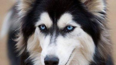 Lustige Hunde Bilder Zum Geburtstag 390x220 - Lustige Hunde Bilder Zum Geburtstag