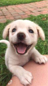 Lustige Hunde Bilder Zum Geburtstag Für Whatsapp 169x300 - Lustige Hunde Bilder Zum Geburtstag Für Whatsapp