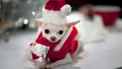 Lustige Hunde Bilder Zum Geburtstag Kostenlos 390x220 - Lustige Hunde Bilder Zum Geburtstag Kostenlos