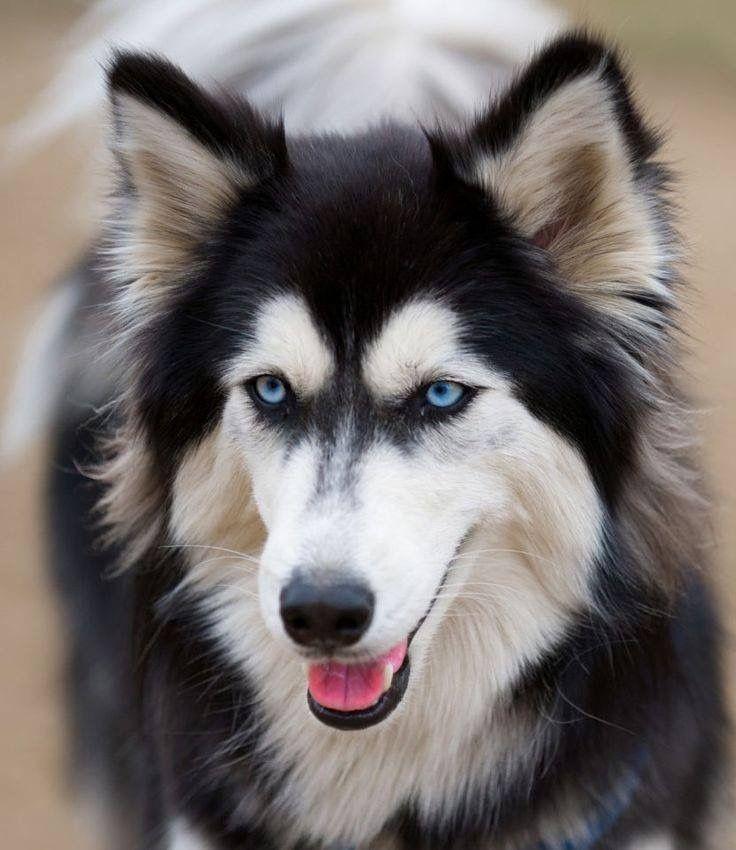 Lustige Hunde Bilder Zum Geburtstag - Lustige Hunde Bilder Zum Geburtstag