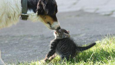Lustige Hunde Und Katzen Bilder Für Facebook 390x220 - Lustige Hunde Und Katzen Bilder Für Facebook
