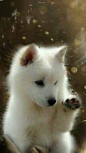 Lustige Hunde Und Katzen Bilder Für Whatsapp 169x300 - Lustige Hunde Und Katzen Bilder Für Whatsapp