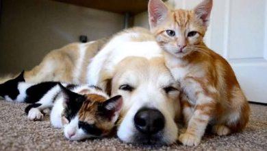 Lustige Hunde Und Katzen Bilder Kostenlos 390x220 - Lustige Hunde Und Katzen Bilder Kostenlos