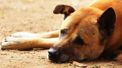 Lustige Hundebilder Hund 390x220 - Lustige Hundebilder Hund
