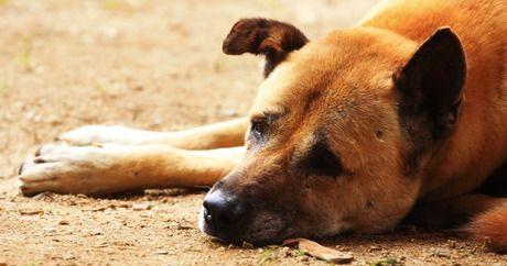 Lustige Hundebilder Hund - Lustige Hundebilder Hund