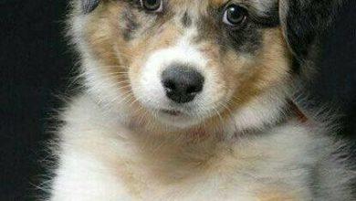 Lustige Hundebilder Kostenlos 390x220 - Lustige Hundebilder Kostenlos