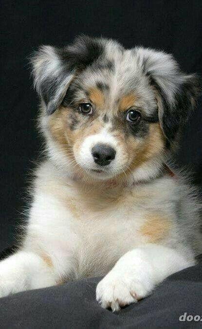 Lustige Hundebilder Kostenlos - Lustige Hundebilder Kostenlos
