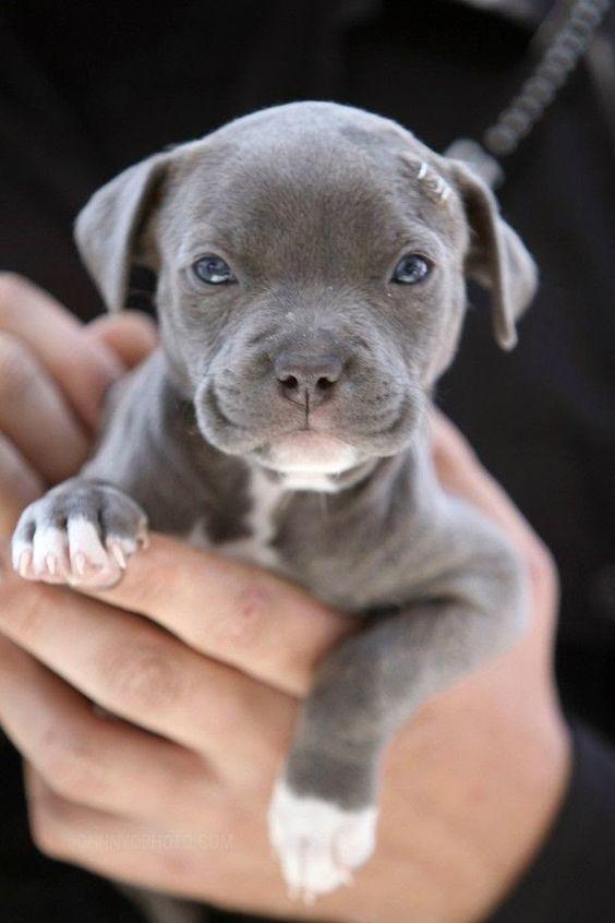 Lustige Hundebilder Mit Sprüchen Für Whatsapp - Lustige Hundebilder Mit Sprüchen Für Whatsapp