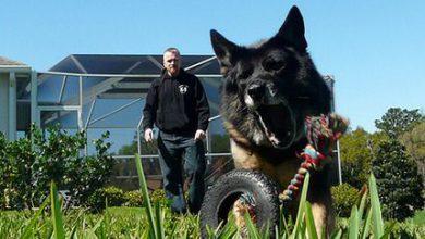 Lustige Hundebilder Mit Sprüchen Kostenlos 390x220 - Lustige Hundebilder Mit Sprüchen Kostenlos