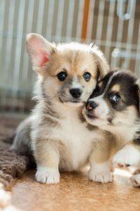 Lustige Hundebilder Mit Sprüchen Kostenlos Für Facebook 200x300 - Lustige Hundebilder Mit Sprüchen Kostenlos Für Facebook