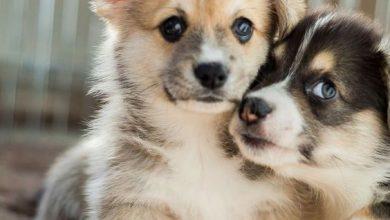 Lustige Hundebilder Mit Sprüchen Kostenlos Für Facebook 390x220 - Lustige Hundebilder Mit Sprüchen Kostenlos Für Facebook