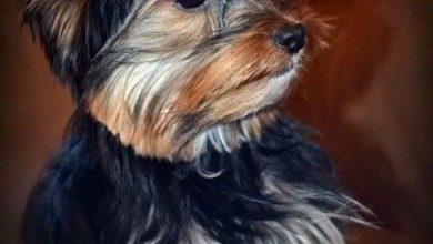 Lustige Hundebilder Mit Sprüchen Kostenlos Für Whatsapp 390x220 - Lustige Hundebilder Mit Sprüchen Kostenlos Für Whatsapp