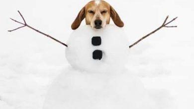 Lustige Hundebilder Mit Sprüchen Kostenlos Herunterladen 390x220 - Lustige Hundebilder Mit Sprüchen Kostenlos Herunterladen