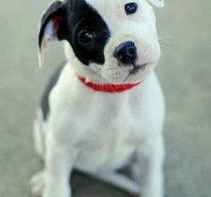 Lustige Hundebilder Mit Sprüchen Kostenlos Kostenlos 236x220 - Lustige Hundebilder Mit Sprüchen Kostenlos Kostenlos