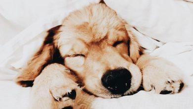 Lustige Hundefotos 390x220 - Lustige Hundefotos