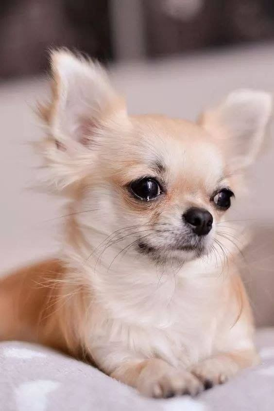 Lustige Hundefotos Kostenlos - Lustige Hundefotos Kostenlos