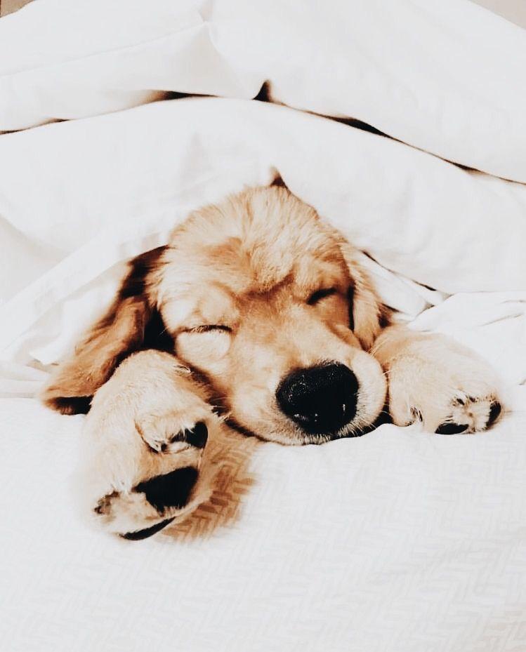 Lustige Hundefotos - Lustige Hundefotos