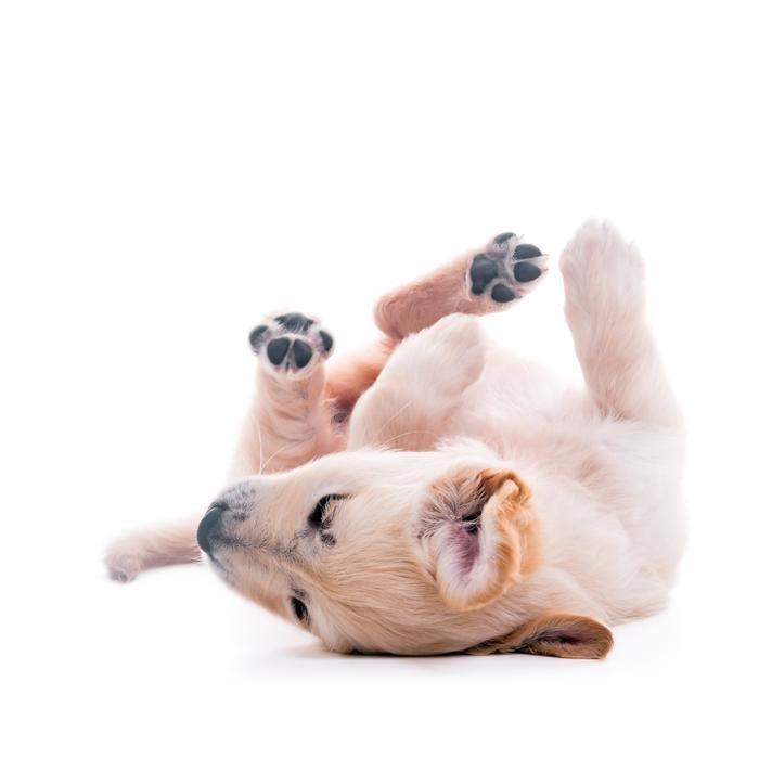Lustige Hundewelpen Bilder Für Facebook - Lustige Hundewelpen Bilder Für Facebook