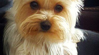 Lustige Hundewelpen Bilder Für Whatsapp 390x220 - Lustige Hundewelpen Bilder Für Whatsapp