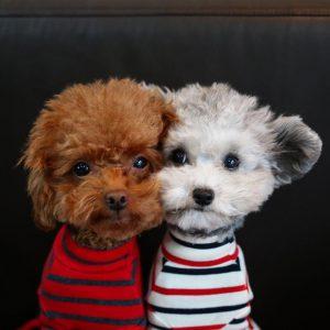 Lustige Hundewelpen Bilder Kostenlos 300x300 - Lustige Hundewelpen Bilder Kostenlos