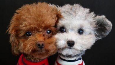 Lustige Hundewelpen Bilder Kostenlos 390x220 - Lustige Hundewelpen Bilder Kostenlos