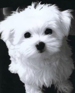 Lustige Hundewelpen Bilder Kostenlos Herunterladen 242x300 - Lustige Hundewelpen Bilder Kostenlos Herunterladen
