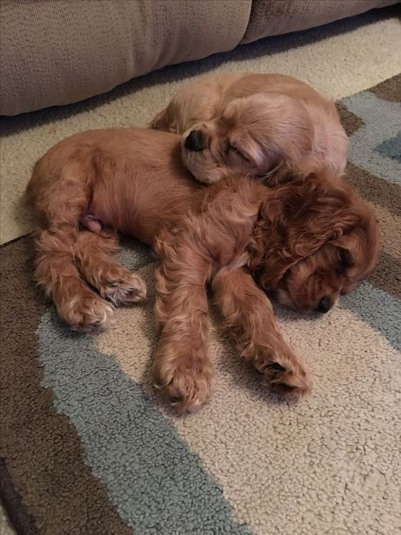 Lustige Hundewelpen Bilder - Lustige Hundewelpen Bilder