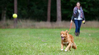 Lustige Tierbilder Hunde Für Whatsapp 390x220 - Lustige Tierbilder Hunde Für Whatsapp