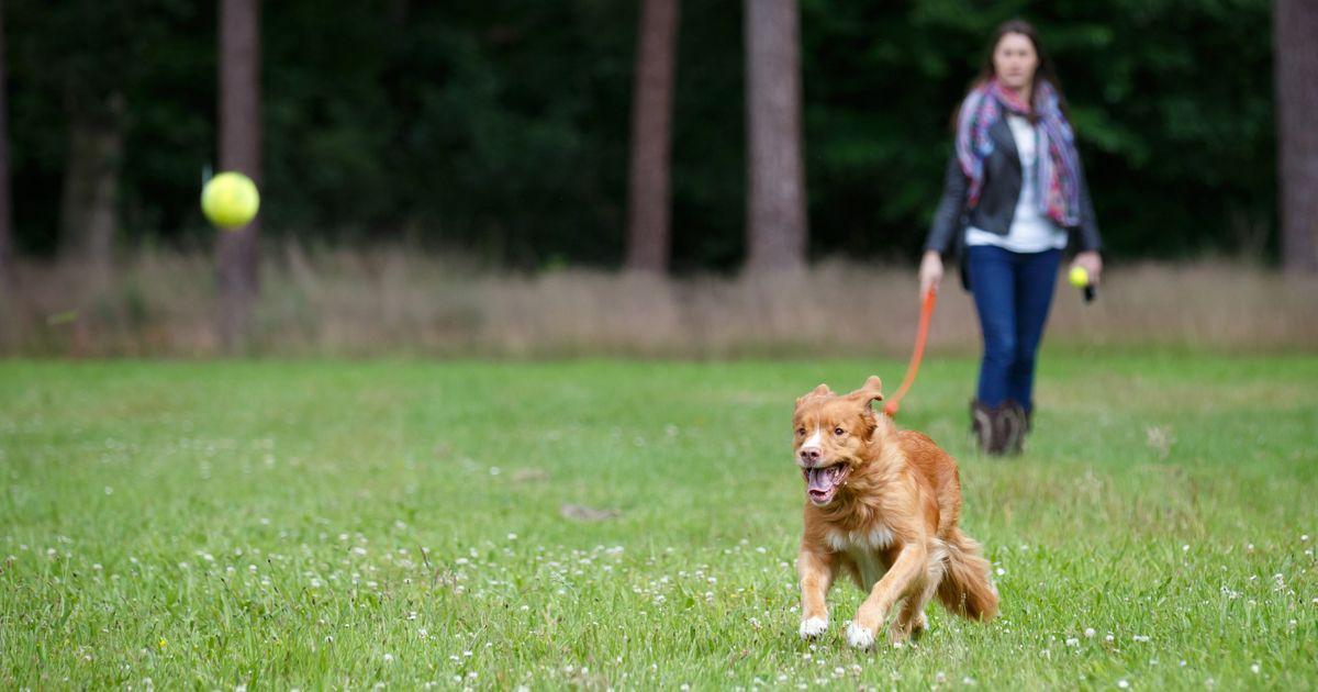 Lustige Tierbilder Hunde Für Whatsapp - Lustige Tierbilder Hunde Für Whatsapp
