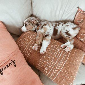 Lustige Tierbilder Hunde Kostenlos Herunterladen 300x300 - Lustige Tierbilder Hunde Kostenlos Herunterladen
