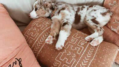 Lustige Tierbilder Hunde Kostenlos Herunterladen 390x220 - Lustige Tierbilder Hunde Kostenlos Herunterladen