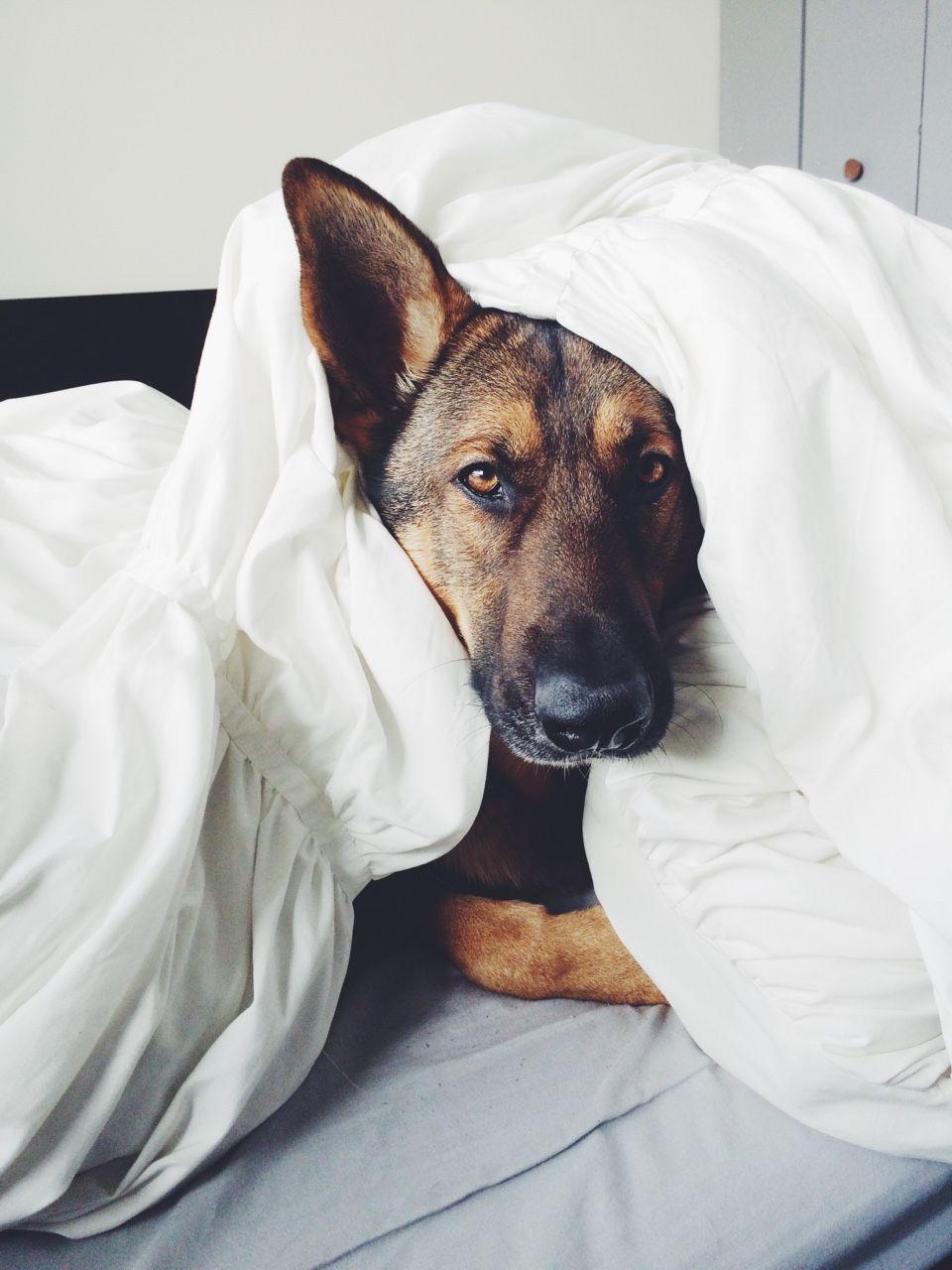 Lustige Weihnachtsbilder Mit Hunden Für Facebook - Lustige Weihnachtsbilder Mit Hunden Für Facebook