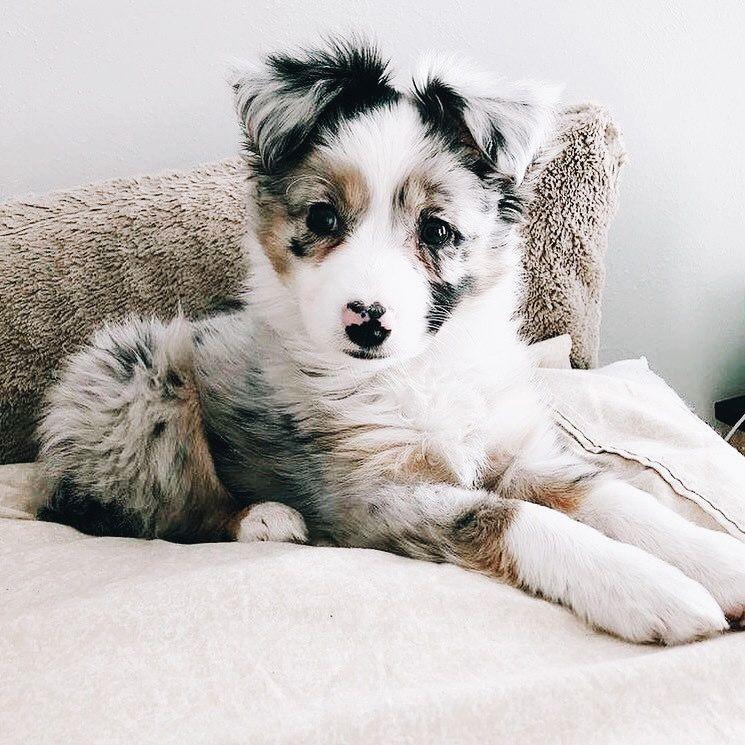 Lustige Weihnachtsbilder Mit Hunden Für Whatsapp - Lustige Weihnachtsbilder Mit Hunden Für Whatsapp