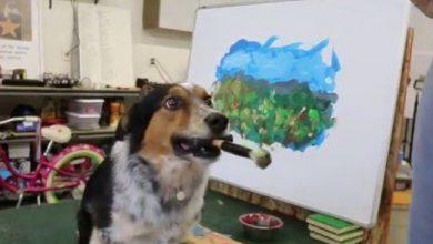 Lustiger Hund 390x220 - Lustiger Hund