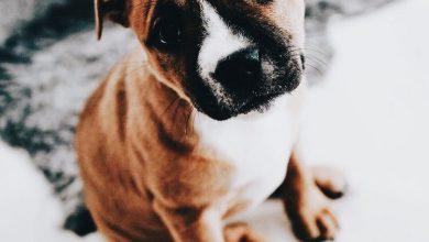 Lustiges Bild Hund 390x220 - Lustiges Bild Hund