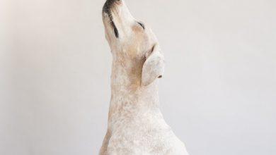 Lustiges Hundebild 390x220 - Lustiges Hundebild