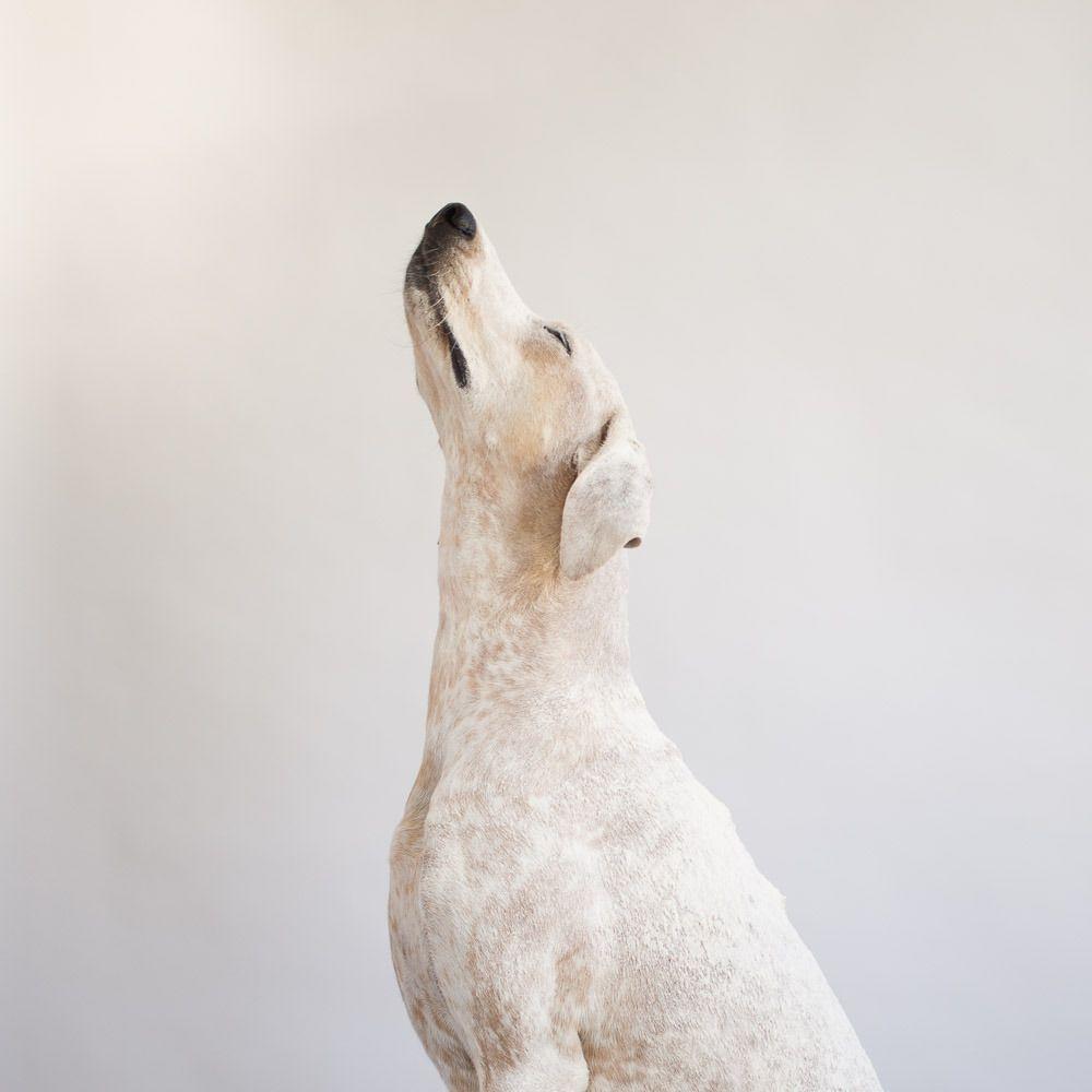 Lustiges Hundebild - Lustiges Hundebild